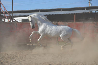 DWP FREE HORSE STOCK 240 by DancesWithPonies
