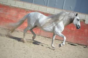 DWP FREE HORSE STOCK 251 by DancesWithPonies