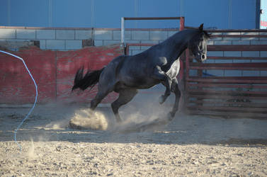 DWP FREE HORSE STOCK 352 by DancesWithPonies