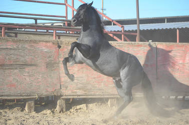 DWP FREE HORSE STOCK 362 by DancesWithPonies