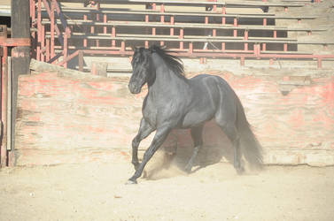 DWP FREE HORSE STOCK 370 by DancesWithPonies
