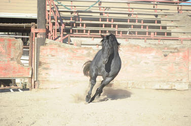 DWP FREE HORSE STOCK 373 by DancesWithPonies