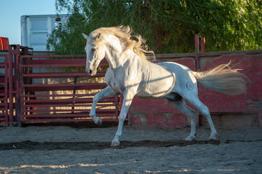 DWP FREE HORSE STOCK 451 by DancesWithPonies