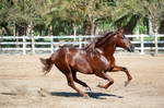 DWP FREE HORSE STOCK 516 by DancesWithPonies