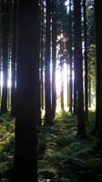 Black forest  1 by skoppio