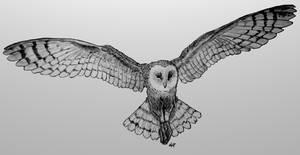 Barn Owl flying by skoppio