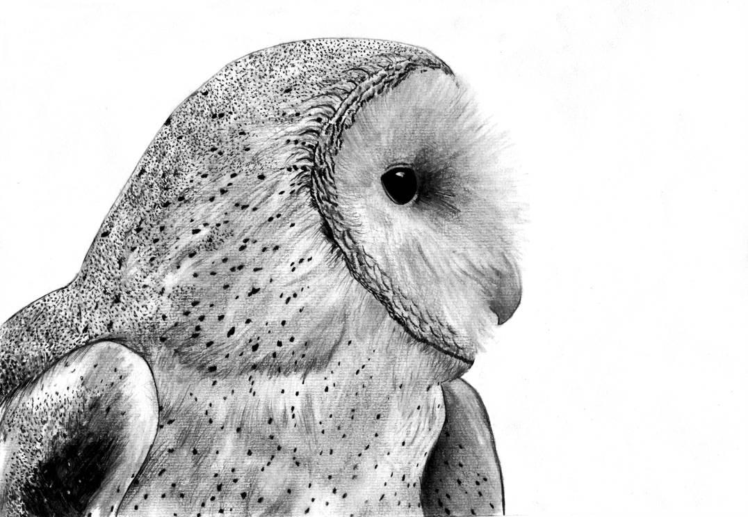Barn Owl by skoppio