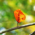 autumn by impatienss