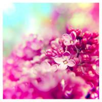 lilac... by impatienss