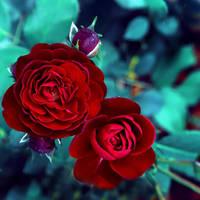 beauties.. by impatienss