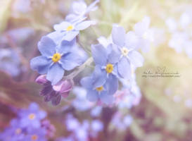 Forget-me-nots by NelEilis
