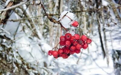 In the snow by heartbreakdi