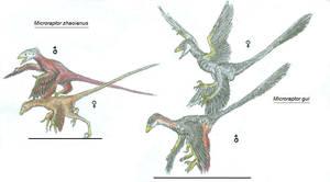 Microraptosauria by Ashere