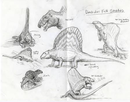 Field Sketches of Dimetrodon grandis by Ashere