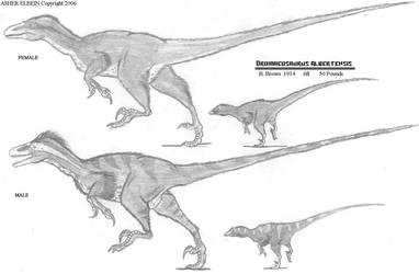 Dromeosaurus Study by Ashere