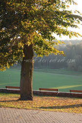 golden autumn by strigoi-mort
