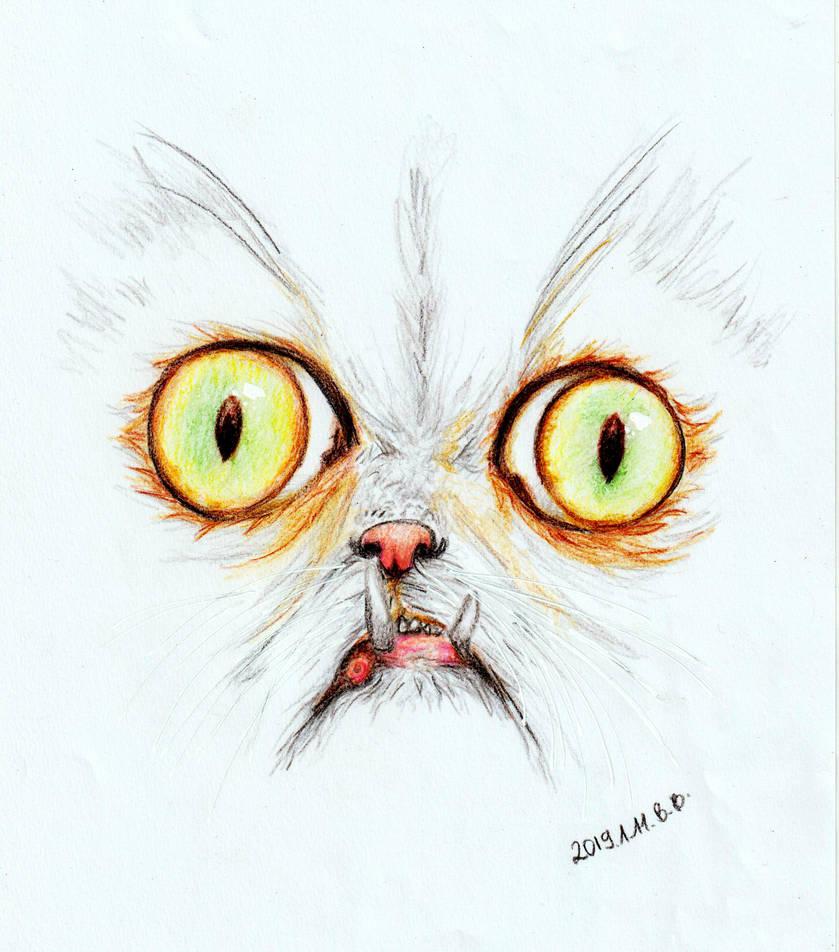 Wilfred the Warrior Cat by epresvanilia