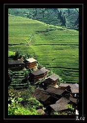 Terraced fields by leo723