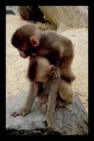 Japanese monkey 1 by Osiris-NihonWa