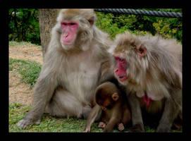 Japanese Monkey 2 by Osiris-NihonWa