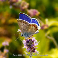 Butterfly by parisxmas