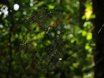 Spiderweb by writerga07