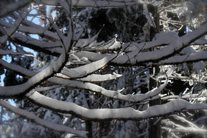 Crystal Branches by Artfoundry