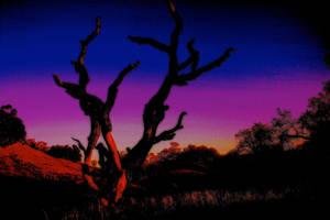 Deadwood by Artfoundry