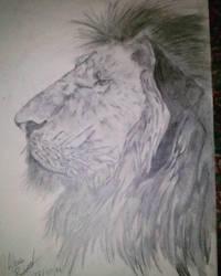 Graphite lion by piche2