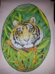 Tiger by squadra1317