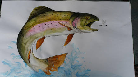 Trout by squadra1317