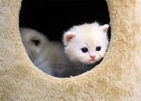 kitten by SilentPain0