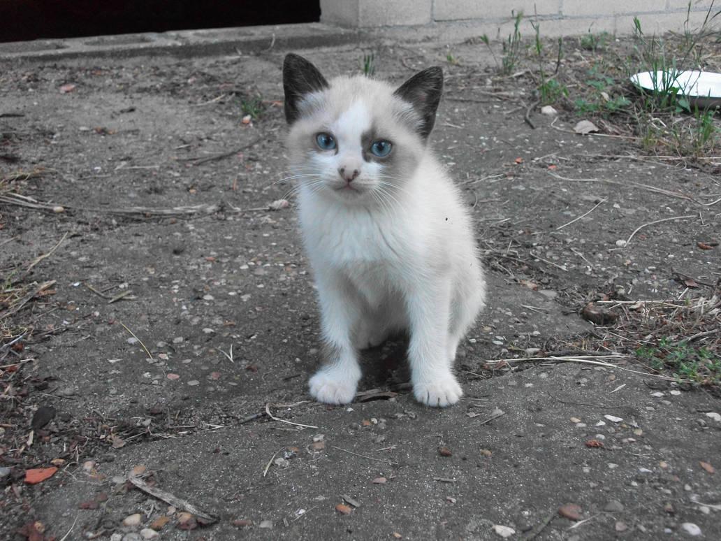 Spotty Kitty by aeli9