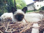 Owl cat by aeli9