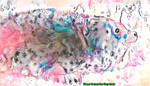 Dream Seal 7/14/17 - Fun with No Attire by MatthewandKatlayn