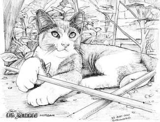 mi gato by coronadopublicidad