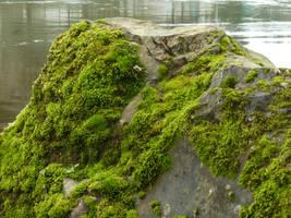 Rock Moss by DanikaMilles
