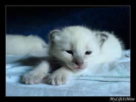 My Pretty Kitten 3 by MyLifeIsMine
