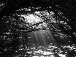 Black and White Woods by Silent-Broken-Wish
