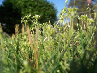 Grass by Silent-Broken-Wish