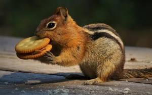 Golden-Mantled Chipmunk by finhead4ever