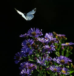 White butterfly by finhead4ever