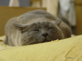 Happy flat cat nap by InKibus