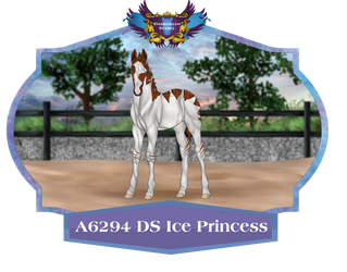 A6294 DS Ice Princess by DarkoriamStables