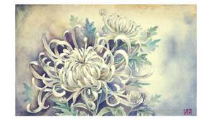 Chrysanthemum by Claparo-Sans