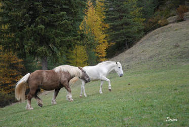 Two friends by Tircisia