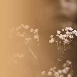 fading dreams by PsycheAnamnesis
