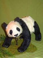 Shen 1 by montybearkins
