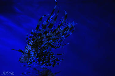 Deep Blue by Alvia