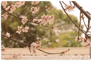 Winter blossom by sharvani